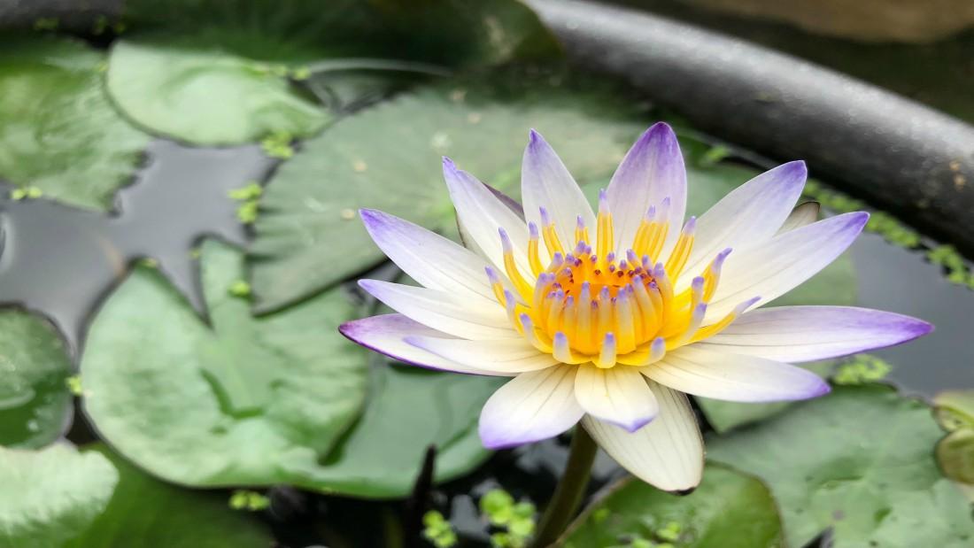 ayurveda-yoga-tnequilibrium-loto