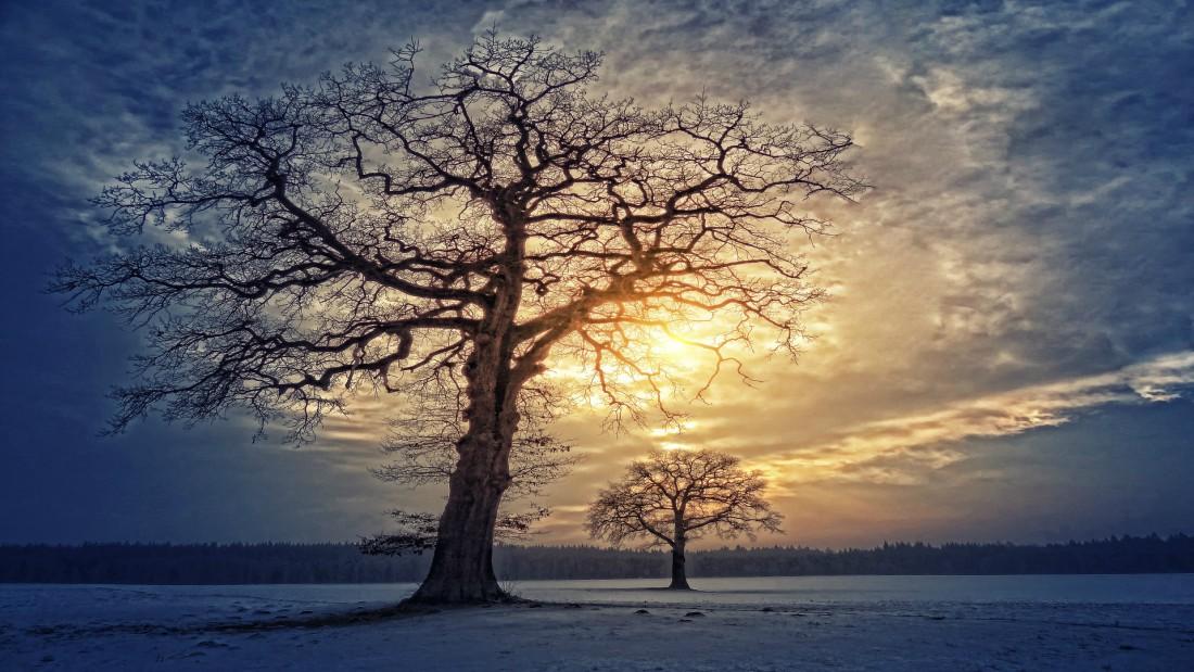 ayurveda-yoga-tnequilibrium-ramas