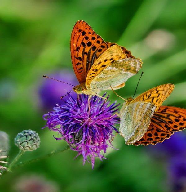 ayurveda-yoga-tnequilibrium-mariposa