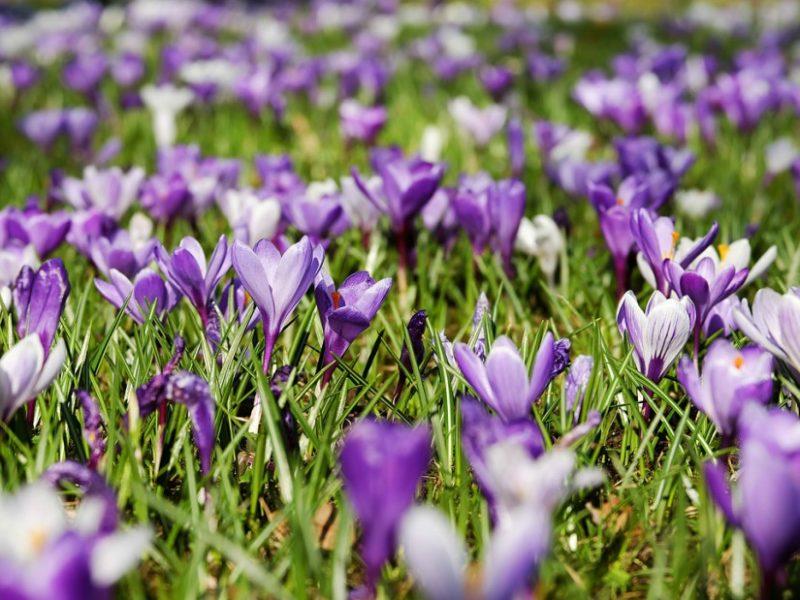 ayurveda-yoga-tnequilibrium-primavera