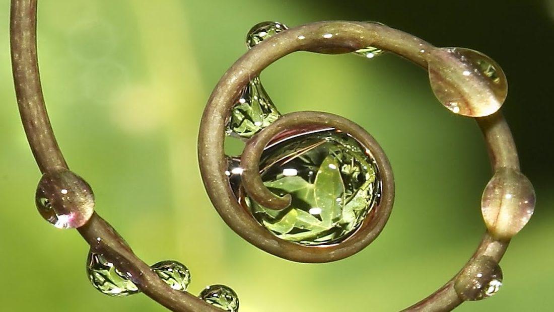 ayurveda-yoga-tnequilibrium-espiral